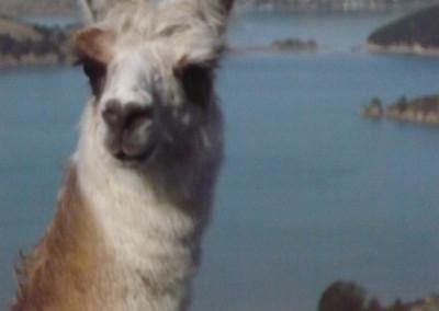 llama-figures-271