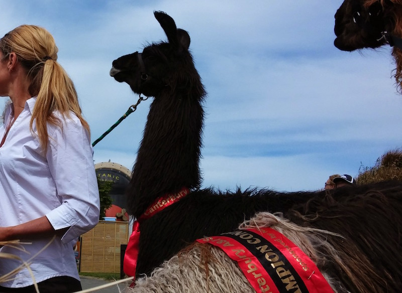 Get Ready for the Christchurch A&P Show Part 1