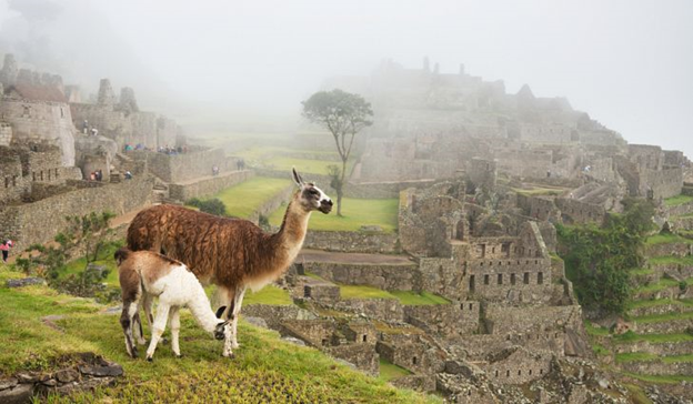 Research on Llamas, Alpacas and the Inca Empire