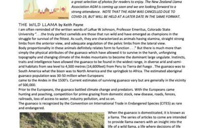 Lama Glama Gazette: Issue 1 Vol 3 2020