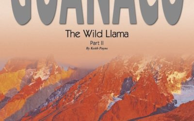 The Wild Llama Part II By Keith Payne